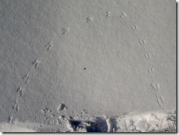 Snowshoeing 011