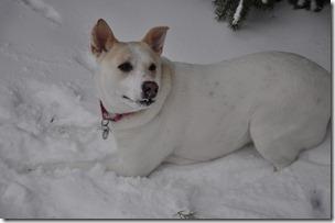 Snow 044